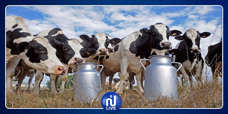 بيع مشروط ونفاذ المخزون..تواصل أزمة الحليب في تونس