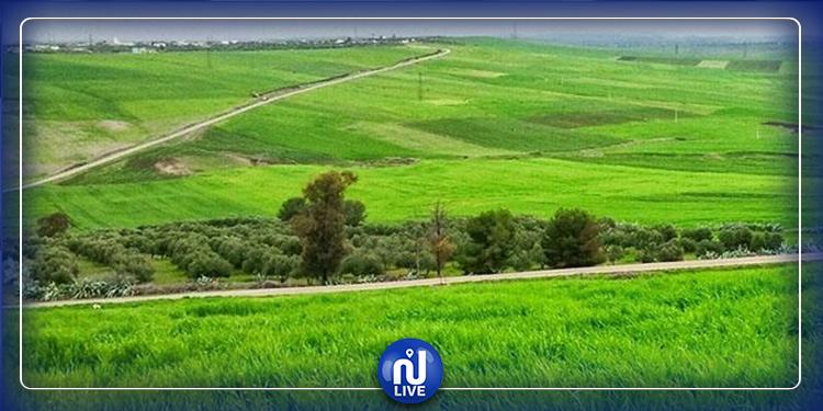 باجة: الدولة تسترجع قرابة 53 هكتارا من أراضيها المستولى عليها