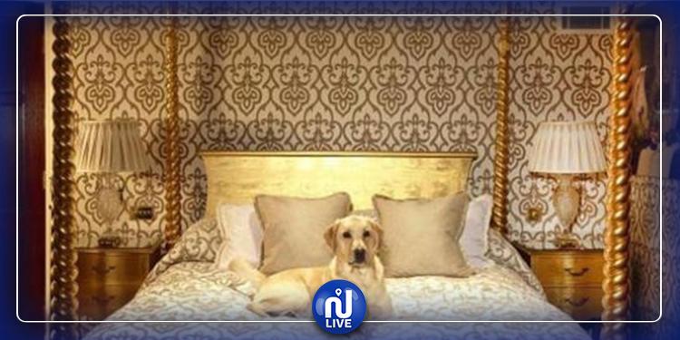بالصور: فندق لرفاهية ورعاية الكلاب في الأردن !