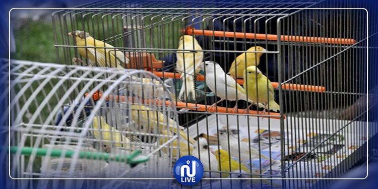 قابس: مشاركة 89 مربي طيور في البطولة الوطنية الثالثة لعلم الطيور