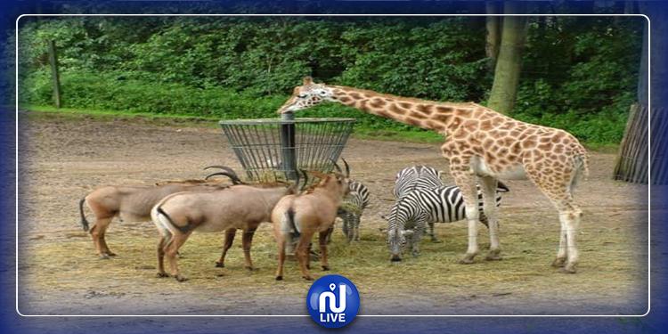 أمريكا: ولادة ''تاريخية'' في حديقة حيوانات (فيديو)