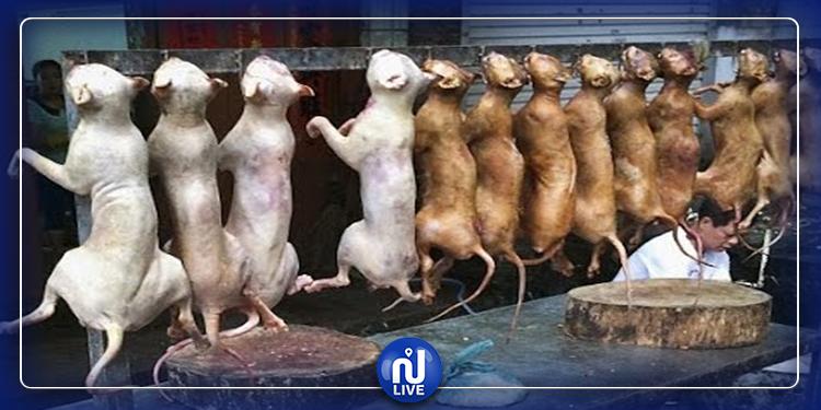 أخيرا: الكلاب والقطط حيوانات غير صالحة للأكل في الصين
