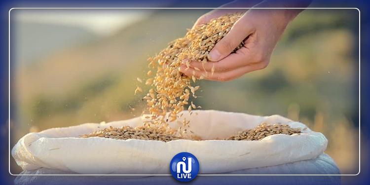 وزير الفلاحة: نتوقع صابة متوسطة من الحبوب هذا العام