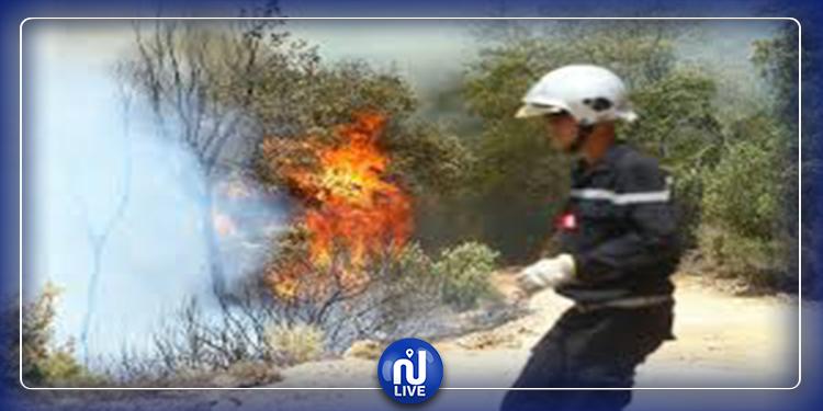 تونس:  96 % من الحرائق مفتعلة وعقوبتها تصل إلى الإعدام