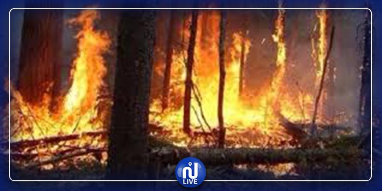 الكاف: اندلاع حريق هائل بغابة الكاف