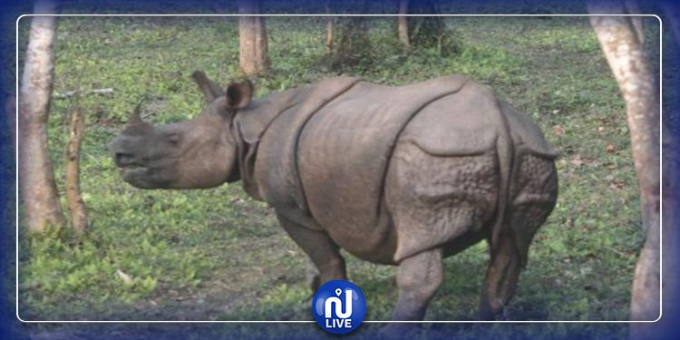 دراسة: مئات الحيوانات البرية تواجه مصير الانقراض