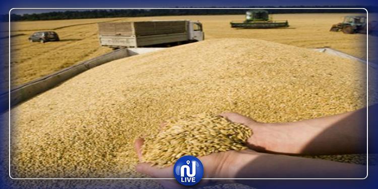 طاقة مراكز تجميع الحبوب بسليانة كافية لإستيعاب الصابة الحالية