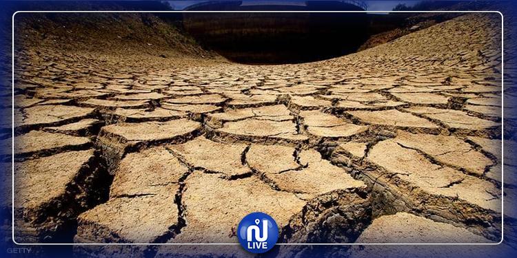 تونس: تضرر 150 ألف هكتار جرّاء الجفاف