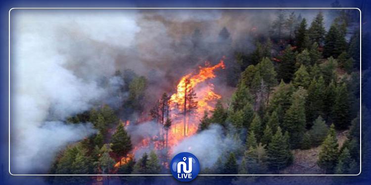 سليانة: حريق يلتهم حوالي 3.5  هكتارا من الأشجار