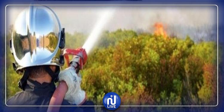 مارث: أعوان الحماية المدنية يمنعون النيران من حرق منبت الغابات بالزركين