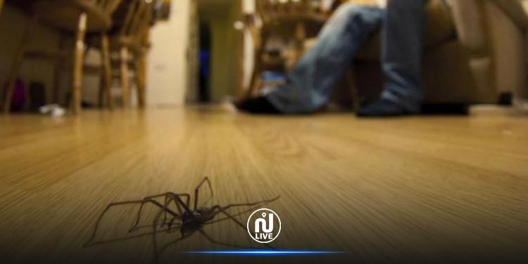 طرق بسيطة لمنع العناكب من دخول المنزل