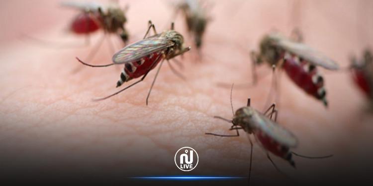 الجزائر: إرتفاع المصابين بداء الملاريا