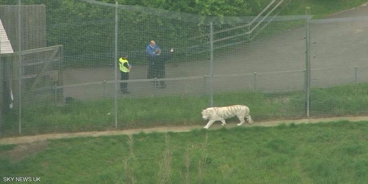 بريطانيا: نمر يقتل حارسة في حديقة حيوان