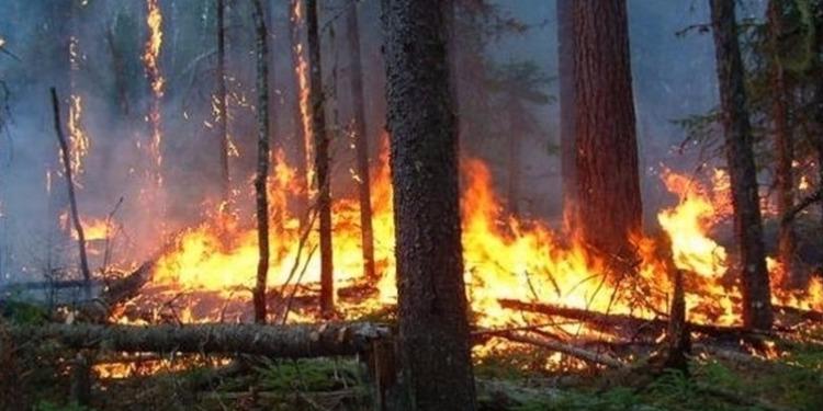 قابس : إندلاع حريق آخر يأتي على مساحة خمسة هكتارات