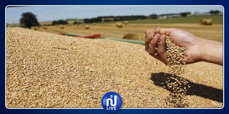 الكاف: صابة الحبوب ستتجاوز 4  ملايين قنطار