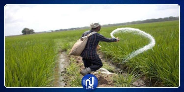 الكاف: نقابة الفلاحين تدعو إلى توفير البذور والقروض