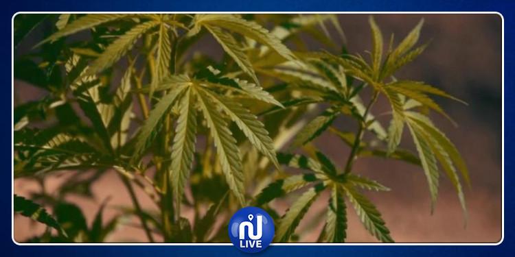 تشريع عائدات الماريخوانا في الولايات المتحدة