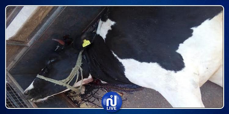 العاصمة: إلقاء القبض على شخصين من أجل ذبح الحيوانات خفية