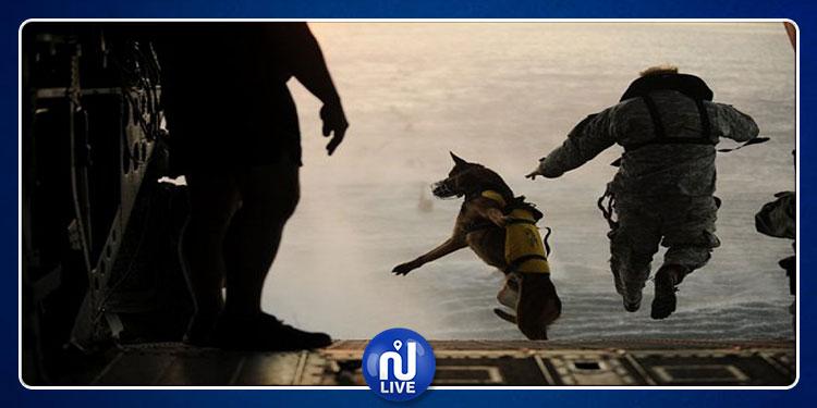 مقتل البغدادي يكلف الولايات المتحدة كلبا موهوبا فقط