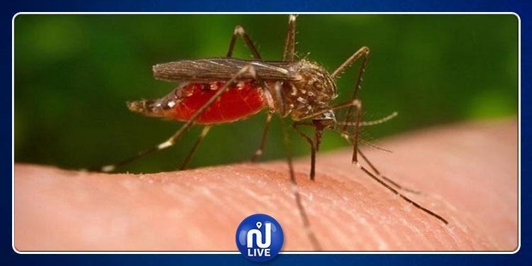 صفاقس: قرارات جديدة لمقاومة اجتياح الحشرات