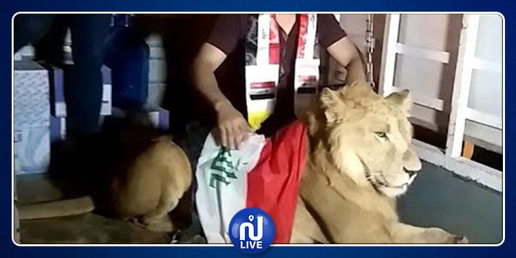 أسد يحمي متظاهري العراق من كلاب الشرطة (فيديو)