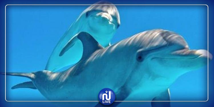اكتشاف سر جديد عن الدلافين