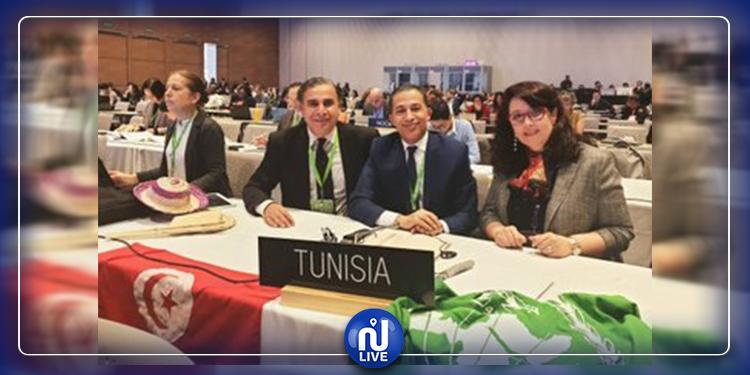 Le palmier dattier tunisien inscrit au patrimoine immatériel de l'UNESCO