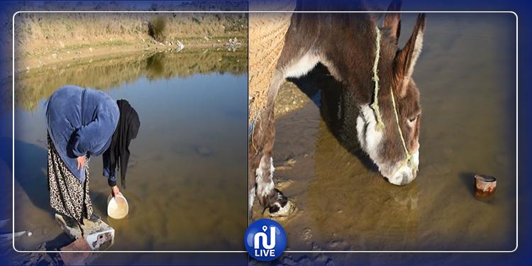 يشربون المياه مع الحمير..في القيروان (صور)