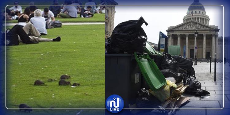 القمامة والجراذن تكتسح شوارع باريس