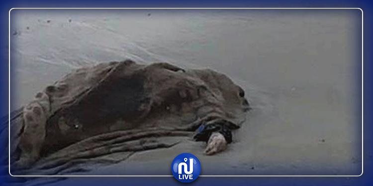العثور على جثة مشوهة في شاطئ رأس  أنجيلا