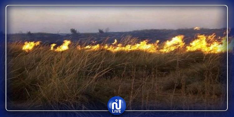 غار الملح:السيطرة على حريق شب بالمنطقة الغابية العيون