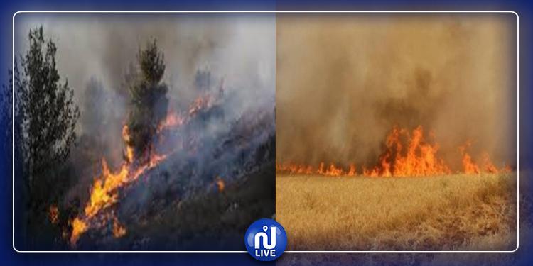 الكاف: ضبط خطة جهوية للتصدي الى خطر الحرائق والحد من خسائرها