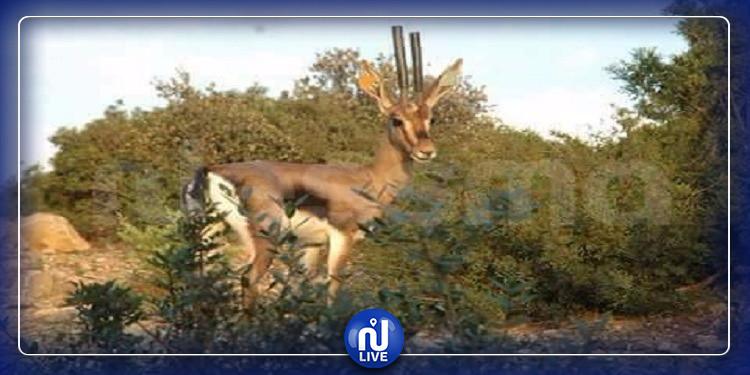 700 حيوان مهدد بالإنقراض في تونس