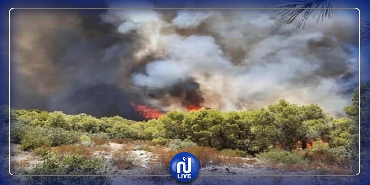رئيس الوزراء الجزائري: الحرائق وانقطاع المياه مؤامرة مفتعلة