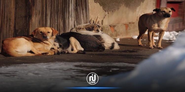 حلق الوادي: تهيئة فضاء  لإيواء الكلاب السائبة وتلقيحها وتعقيمها