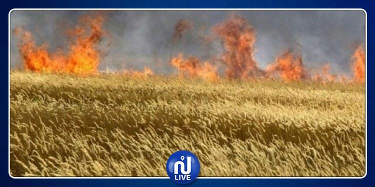 Siliana : Un incendie ravage 200 hectares de cultures de blé