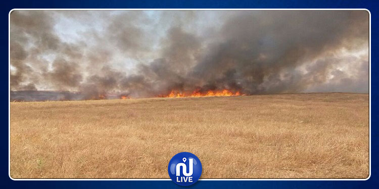 مجاز الباب: حريق  يأتي على أكثر من 90 هكتارا من الزراعات الكبرى