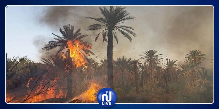 قبلي : حريق هائل في واحة يأتي على 40 شجرة نخيل وعدد من أشجار الزيتون