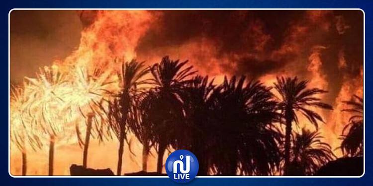 القصرين: حريق يأتي على مساحة هامة من منابت الحلفاء