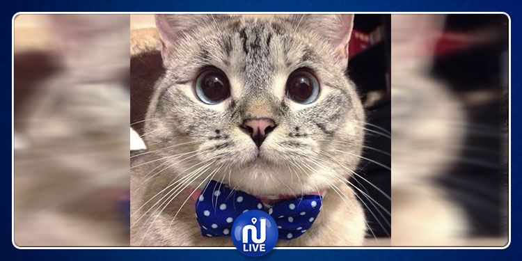 قطة تجني 8 آلاف دولار عن كلّ منشور على الانستغرام (صور)