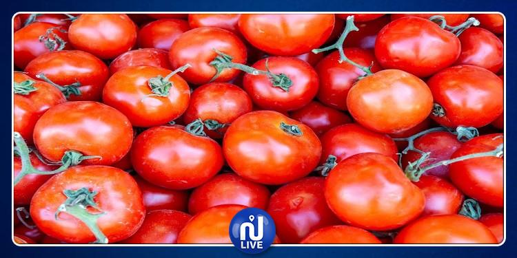 تطوّر إنتاج الطماطم الفصلية بنسبة 43 بالمائة