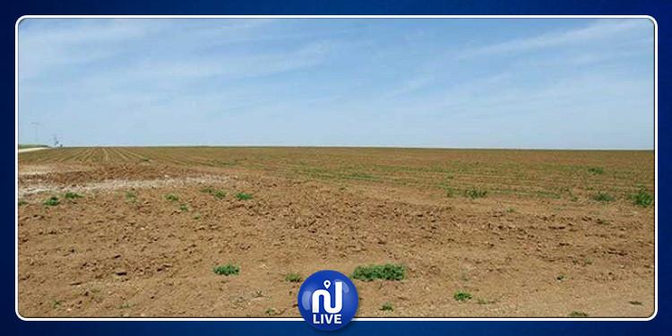 زغوان: الدّولة تسترجع 98 هكتار من أراضيها المستولى عليها