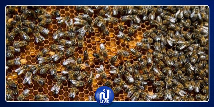 النوم مع النحل: طريقة جديدة لعلاج هذه الأمراض