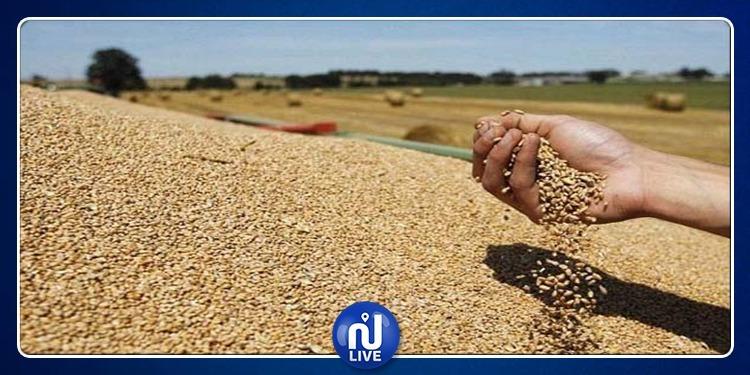 سليانة: توفير 3 آلاف قنطار من البذور الممتازة لصالح الجهة