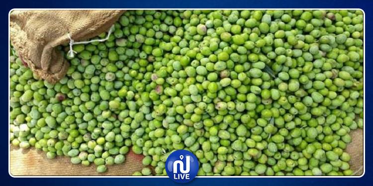 جندوبة : إنتاج 24 الف طن من الزيتون لموسم 2020/2019