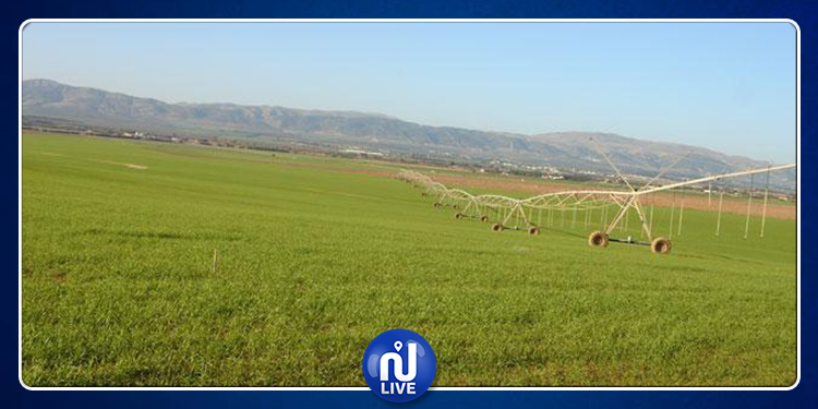 صفاقس: الدولة تسترجع 4 هكتارات من أراضيها