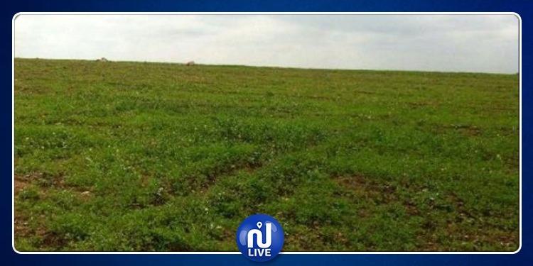 نابل: استرجاع أرض فلاحية دولية تمسح 417 هكتارا