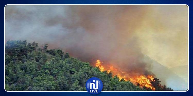 كاليفورنيا: الرياح تؤجّج حرائق الغابات