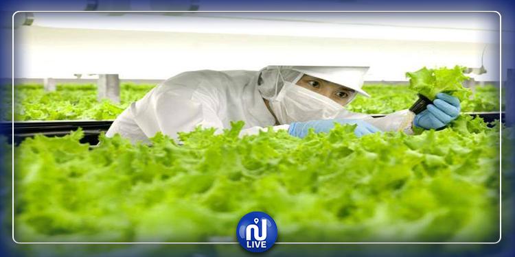 Au Japon, les usines de légumes remplacent les campagnes