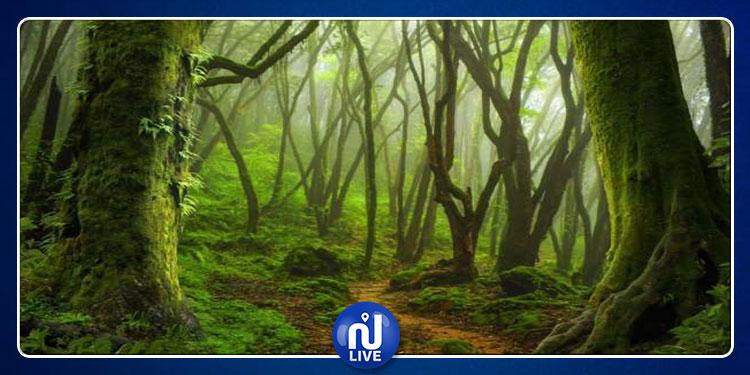 علماء يكتشفون ظاهرة غامضة في غابات الأمازون